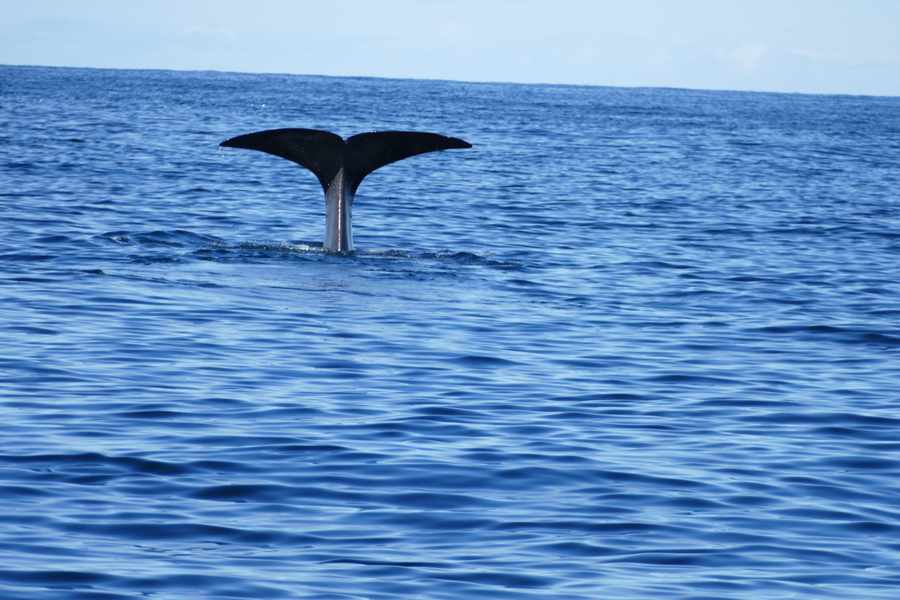 There She Blows! Santosa's Crew Experience A Whale