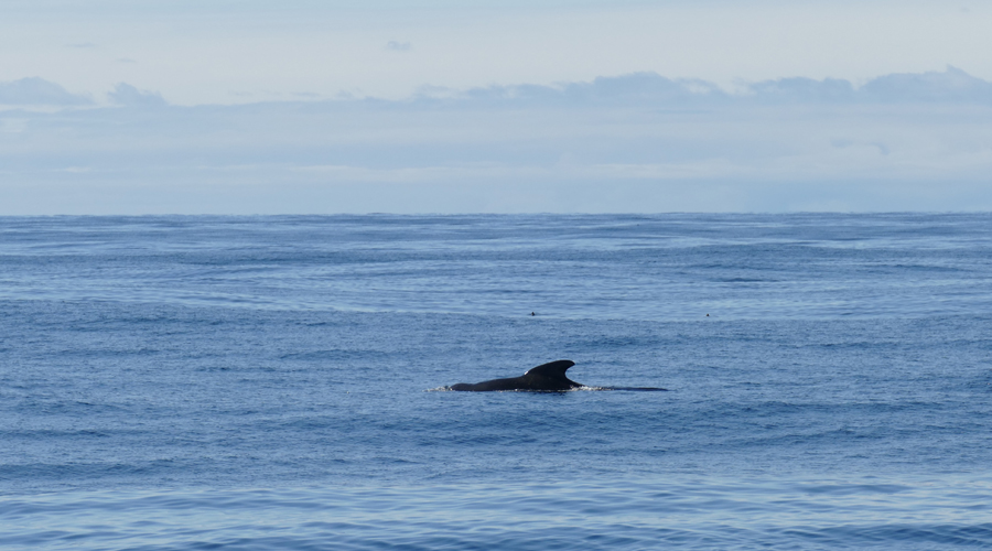 Santosa Records Sounds of A Whale in Nordic Waters